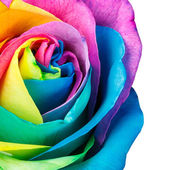 Regenbogen-rose — Stockfoto