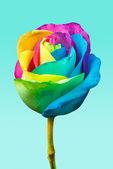Rainbow rose — Zdjęcie stockowe