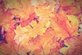 Background autumnal leaves — Stock Photo