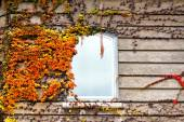 Autumnal leaves on the wall — Stockfoto
