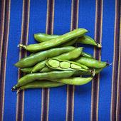 Raw Fava Beans — Stockfoto