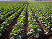 Agriculture of California — Stock Photo