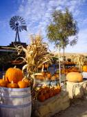 Harvest Pumpkins — Stock Photo