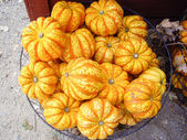 Orange Gourds at market — Stock Photo