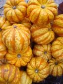 Harvest Gourds — Stock Photo