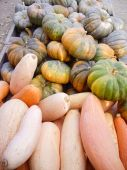 Halloween Gourds — Stock Photo