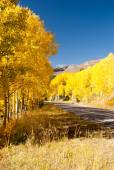 Avenue of Aspens — Stock Photo