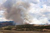 Hillside ablaze in Yellowstone Park — Foto Stock