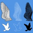 Dove bird wings set — Stock Vector #71620567