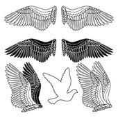 Dove bird wings set — Stock Vector