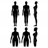 Woman mannequin outlined silhouette torso — Stock Vector