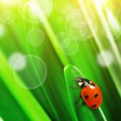 Green leaves with ladybug — Stock Photo