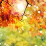 Autumn  leaves — Stock Photo #52895841