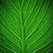 Bright green leaf — Stock Photo