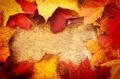Blätter von ahorn — Stockfoto