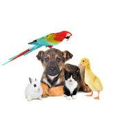 Cão, gato, coelho, papagaio — Foto Stock