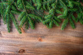 Branch of green fir tree — Photo