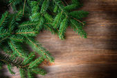 Branch of green fir tree — Stock Photo
