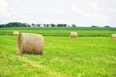 Sommer-Feld mit Heuballen — Stockfoto