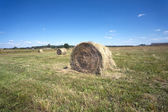 Landscape with hay rolls on cultivate field — Stock Photo
