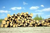 Landscape width stacked pine logs — Stock Photo