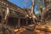 SIEM REAP, CAMBODIA. December 16, 2011.Ta prohm old tree ,siem reap ,Cambodia, was inscribed on the UNESCO World Heritage List — Fotografia Stock
