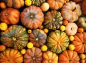 Zucche arancioni — Foto Stock