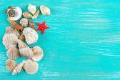 Seashells collection — Stock Photo