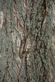 Wooden bark — Stock Photo
