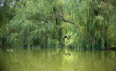 Calm pond — Stock Photo