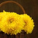 Chrysanthemum in basket — Stock Photo #56219823
