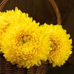 Chrysanthemum in basket — Stock Photo #60113897