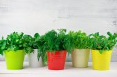 Flavoring greens in buckets — Stockfoto