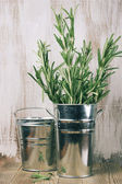 Galvanized bucket with rosemary — Stock Photo