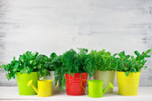 Flavoring greens in buckets — Stock Photo