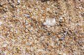 Crushed seashells background — Stock Photo