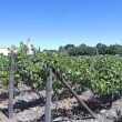 Wine industry in Maipo valley, Chile — Stock Photo #58898987