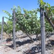 Wine industry in Maipo valley, Chile — Stock Photo #58899013