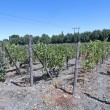 Wine industry in Maipo valley, Chile — Stock Photo #58899113