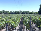 Przemysł winiarski w dolinie Maipo, Chile — Zdjęcie stockowe