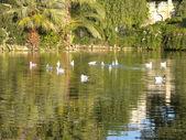 Birds in Ciutadella Park — Stock Photo