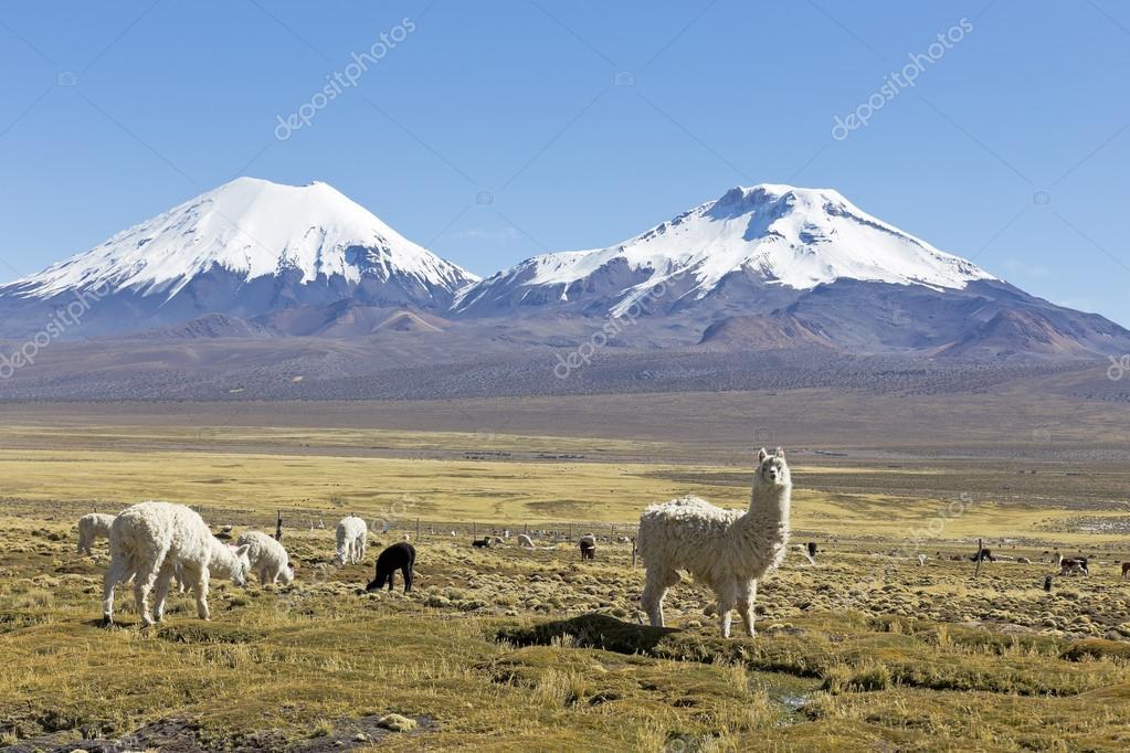 Snowcapped Imágenes De Stock Snowcapped Fotos De Stock: Los Nevados Volcanes Parinacota Y Pomerane. Bolivia