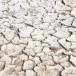 Closeup of dry cracked earth background, clay desert texture — Stock Photo #55725025