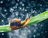Snail with water particles bokeh as the background — Stock Photo