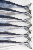 Fresh needlefish for a healthy diet — Stock Photo