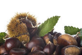 Chestnuts with leaves and burrs isolated on a white background — Stock Photo