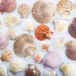 Background made of seashells — Stock Photo #71304709