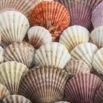 Background made of seashells — Stock Photo #71304907