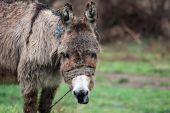 Poor wet donkey on the rain — Stock Photo