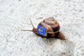 Snail with with symbols of money on a shell — Stock Photo